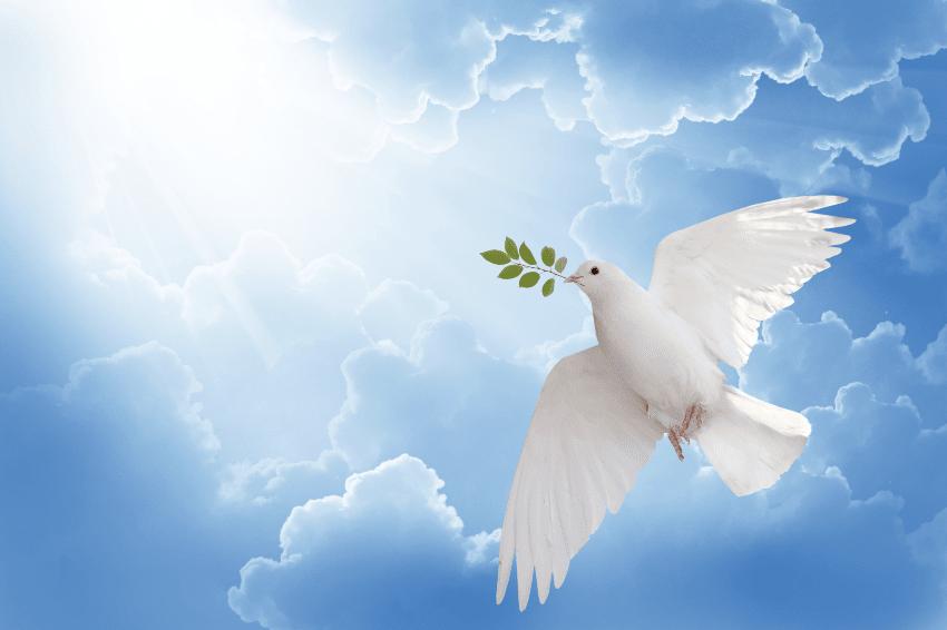 La Storia dell'Ulivo - Colomba della Pace con Ramoscello di Ulivo